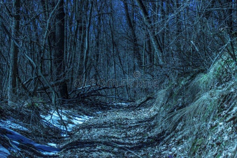 Il percorso magico conduce alla foreste della foresta di notte fotografie stock