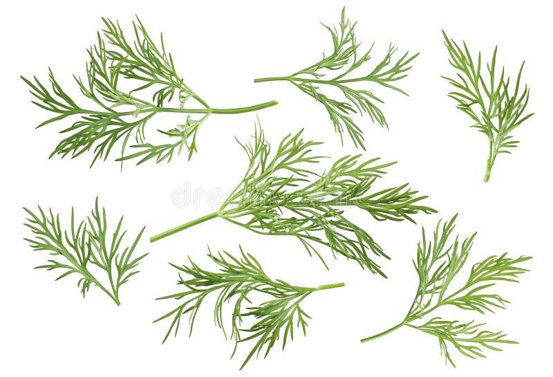 Il percorso stabilito di opzioni dell'erba dell'aneto ha incluso isolato su fondo bianco illustrazione di stock