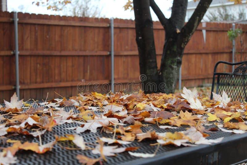 Il permesso di caduta decora la tavola di picnic del cortile fotografia stock libera da diritti