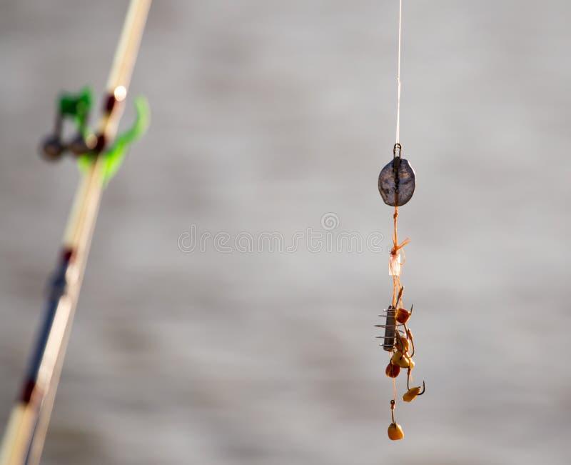 Il pescatore ha messo sopra l'esca sulle canne da pesca dei ganci immagini stock libere da diritti