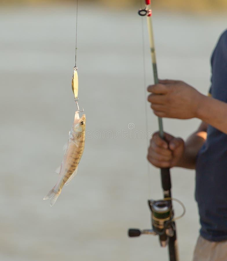 Il pescatore ha pescato il pesce sull'esca fotografia stock libera da diritti