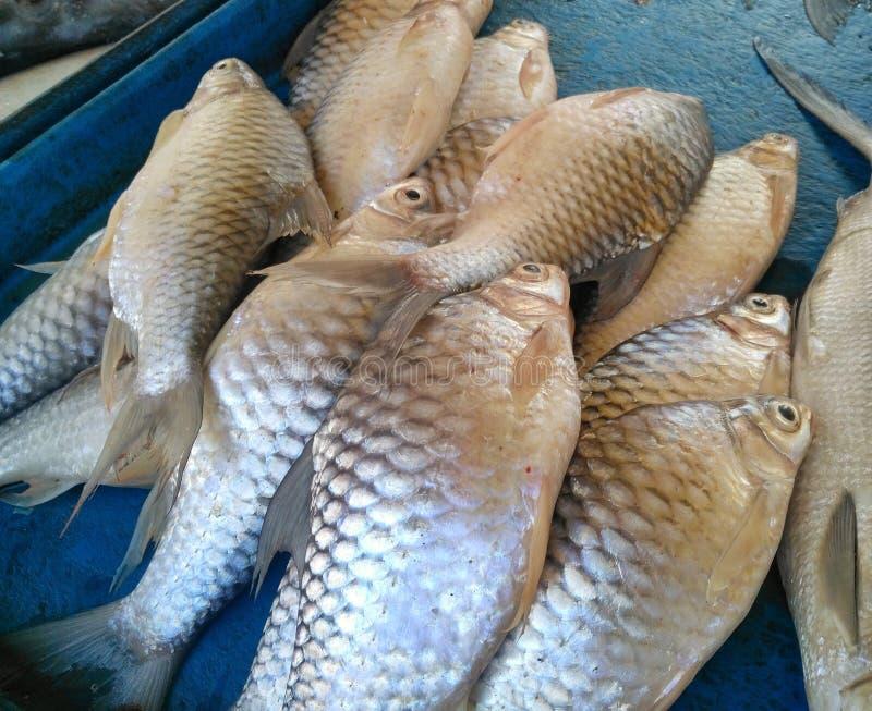 Il pesce fotografia stock