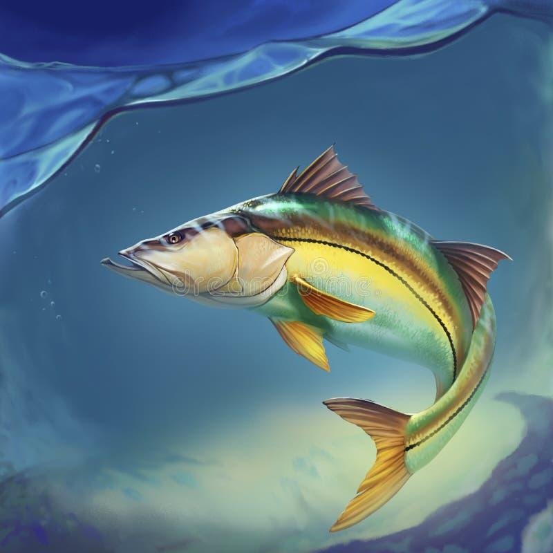 Il pesce comune di Snook monta sull'acqua illustrazione di stock