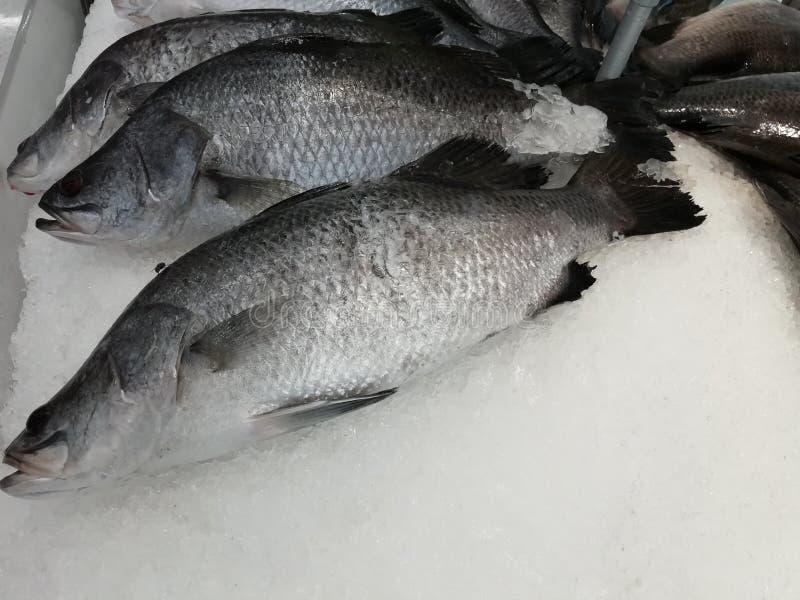 Il pesce nero di tilapia di Nilo ha messo sopra la vendita nel mercato fotografia stock