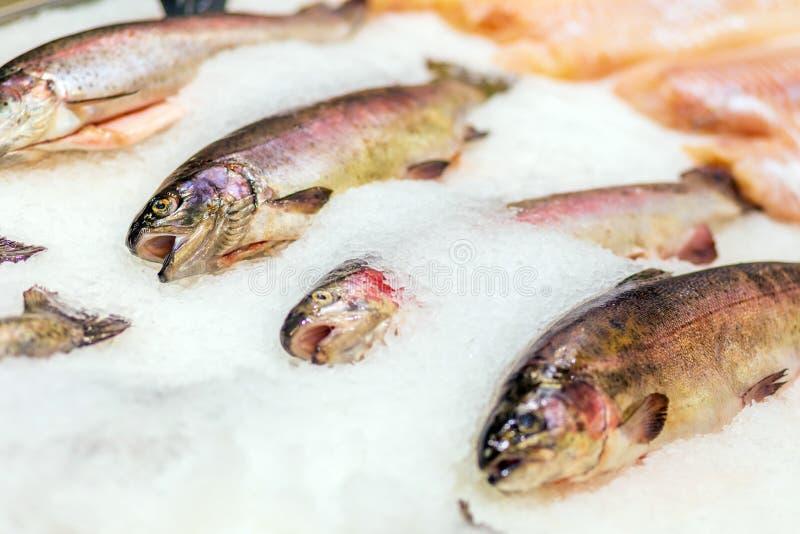 Il pesce raffreddato fresco si trova nelle file nel frigorifero fotografia stock libera da diritti