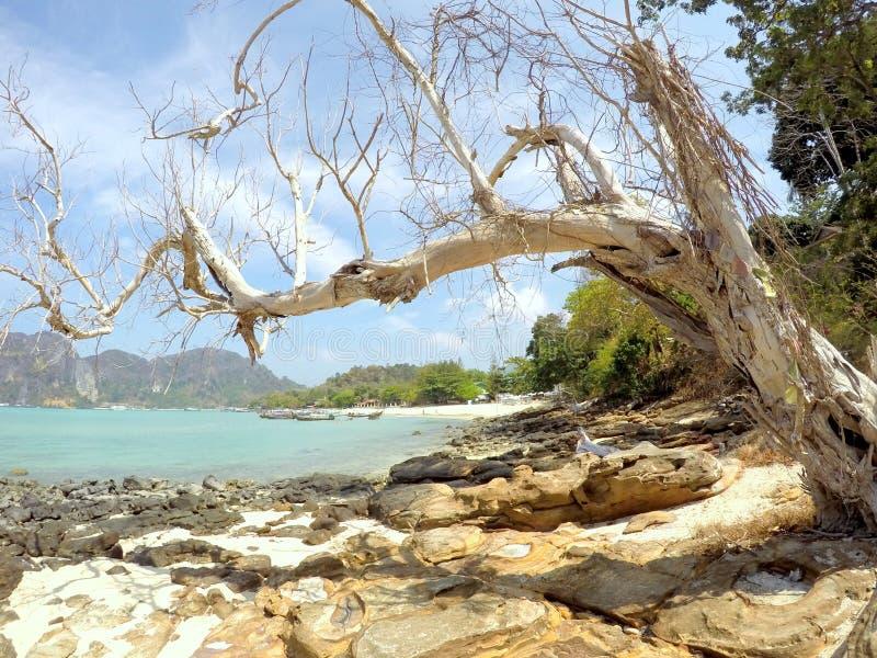 Il phi del phi del KOH indossa la spiaggia Tailandia fotografia stock libera da diritti