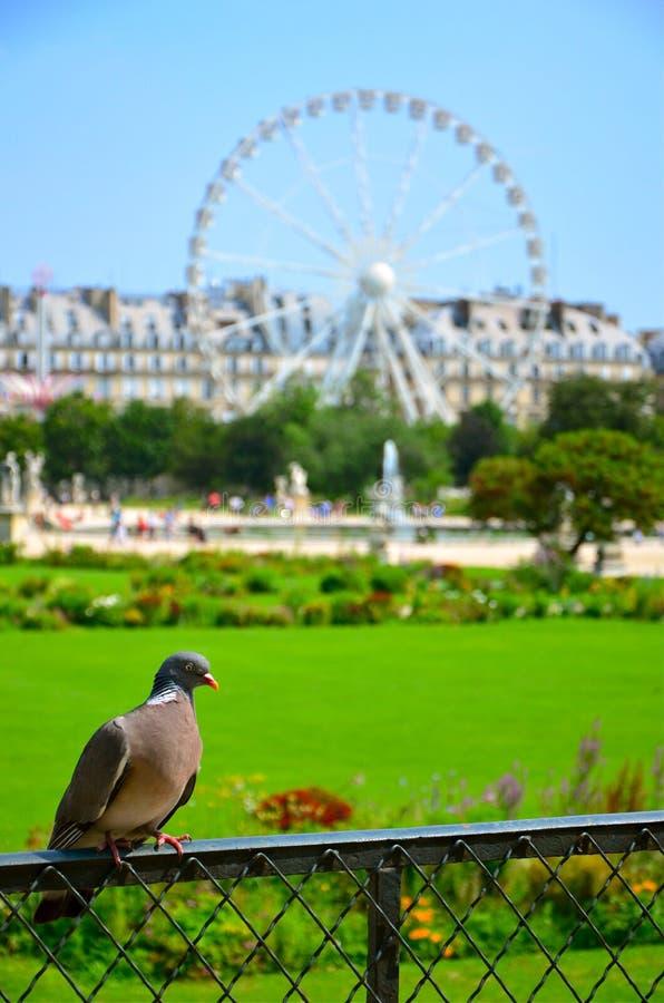Il piccione e la ruota immagine stock libera da diritti