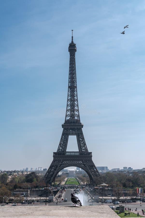 Il piccione e la torre Eiffel immagini stock libere da diritti
