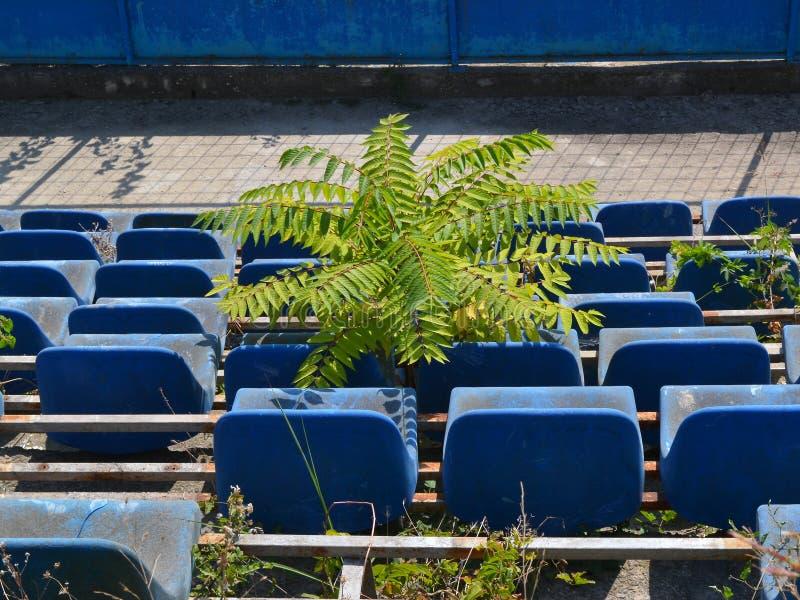 Il piccolo albero si sviluppa fra i sedili del rostro spettatore distrutto in uno stadio abbandonato immagini stock libere da diritti