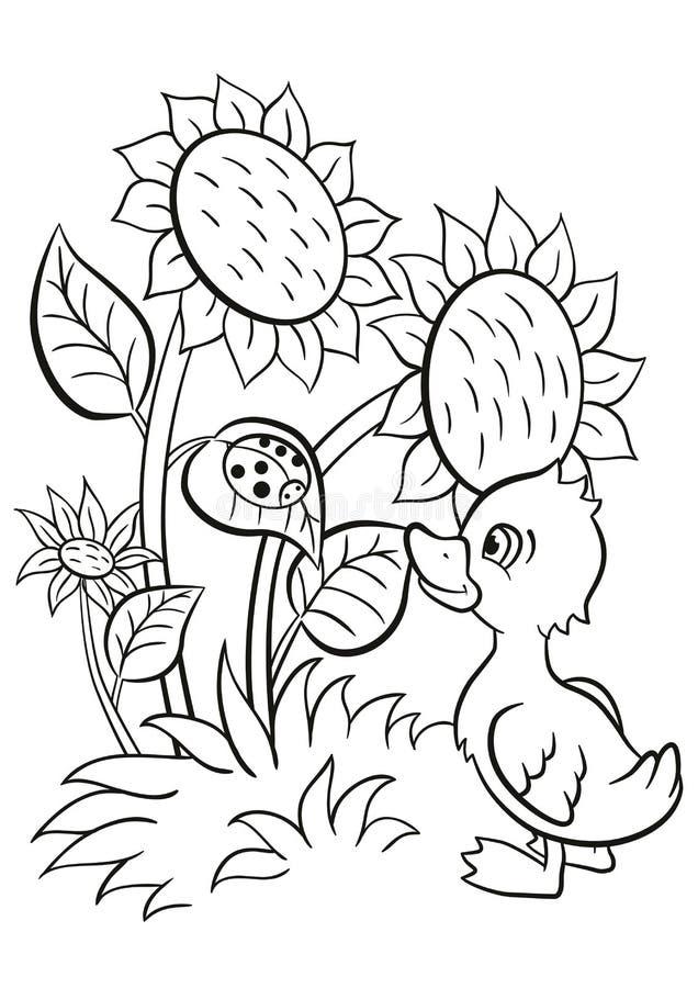 Il piccolo anatroccolo sveglio esamina la coccinella royalty illustrazione gratis