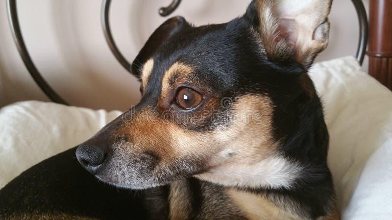 Il piccolo cagnolino sta guardando intorno fotografie stock