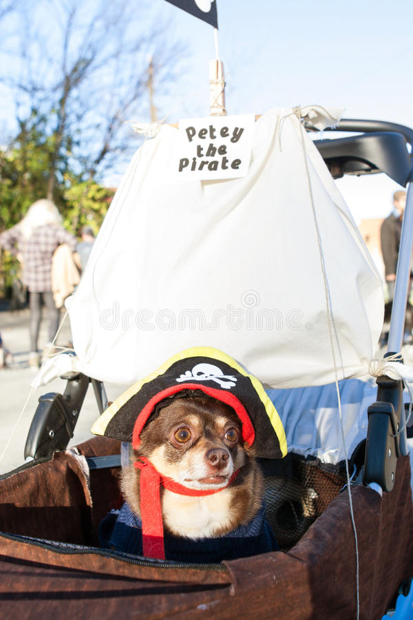Il piccolo cane porta il costume del pirata alla parata eclettica di Atlanta fotografie stock