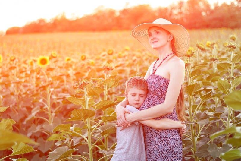 Il piccolo figlio abbraccia la condizione incinta della madre su un campo dei girasoli di fioritura fotografie stock