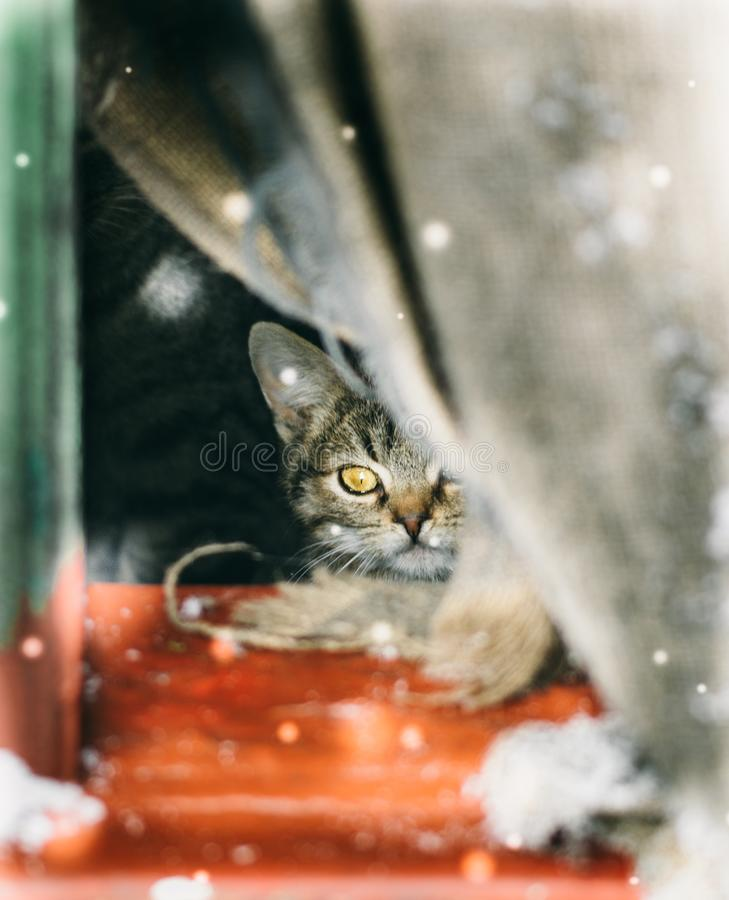 Il piccolo gattino del senzatetto del soriano esamina la neve di caduta immagini stock libere da diritti