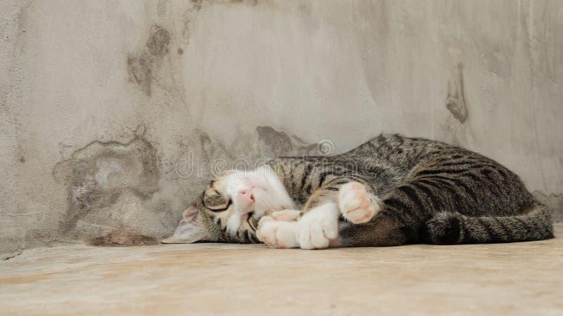 Il piccolo gatto dorme addormentato accanto alla parete del cemento immagine stock