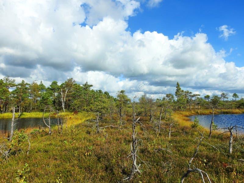 Il piccolo lago due e gli alberi in Aukstumalos inondano, la Lituania immagini stock libere da diritti