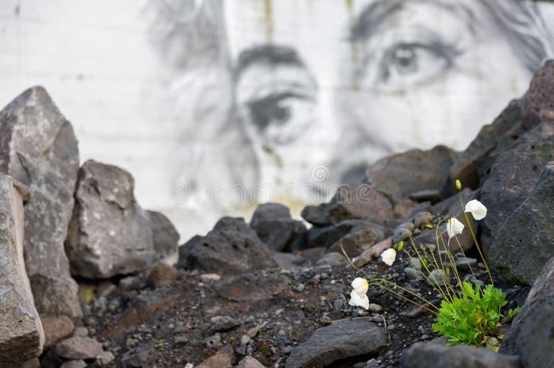 Il piccolo papavero coltivato fiorisce la fioritura nel terreno incolto urbano con il murale sui precedenti fotografie stock