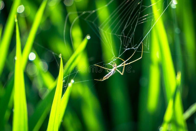 Il piccolo ragno nel web immagine stock libera da diritti