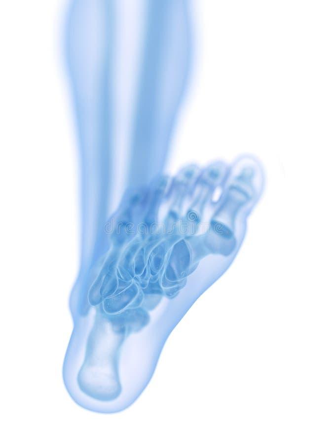 Il piede scheletrico royalty illustrazione gratis