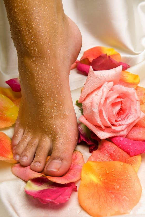 Il piede sul panno di seta con la rosa ed è aumentato immagini stock libere da diritti