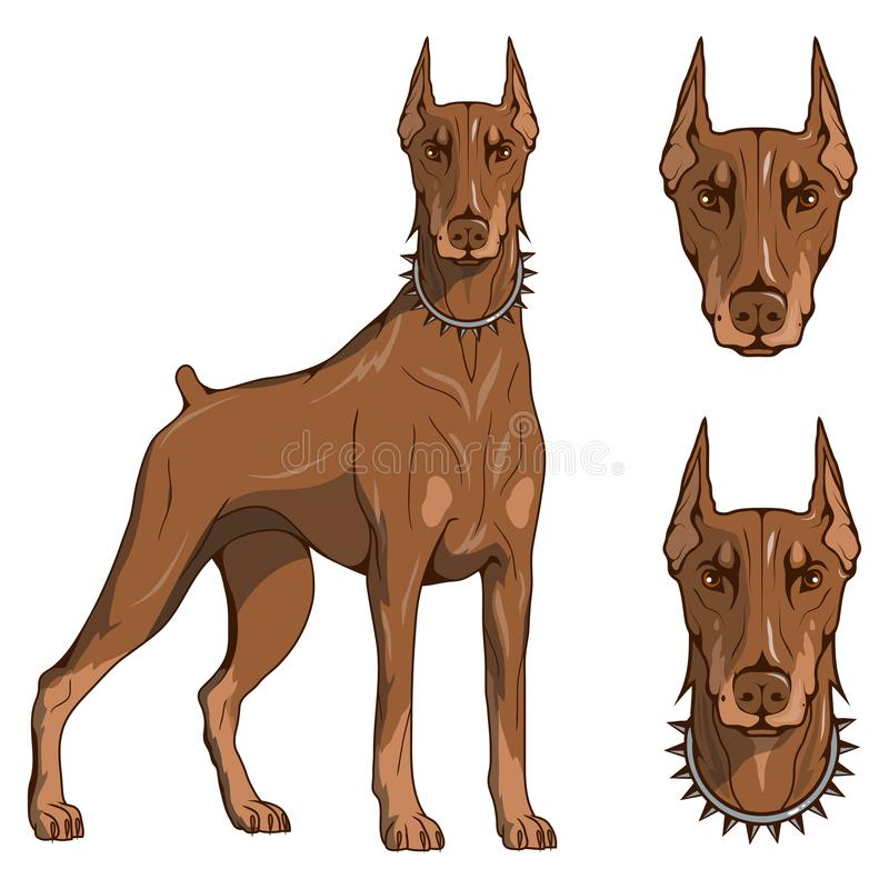 Il pinscher del doberman, il doberman americano, il logo dell'animale domestico, doberman del cane, ha colorato gli animali domes royalty illustrazione gratis