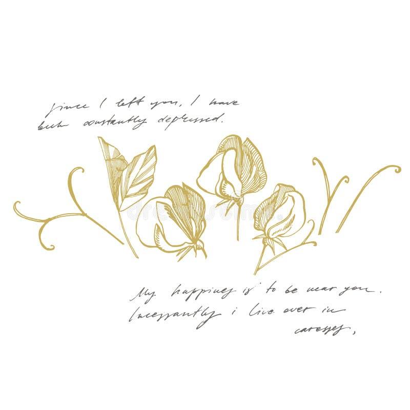 Il pisello dolce fiorisce il disegno e lo schizzo con linea-arte sugli ambiti di provenienza bianchi Illustrazione botanica della royalty illustrazione gratis