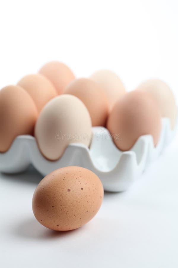 Il pollo del Brown eggs in un supporto di ceramica dell'uovo immagini stock libere da diritti