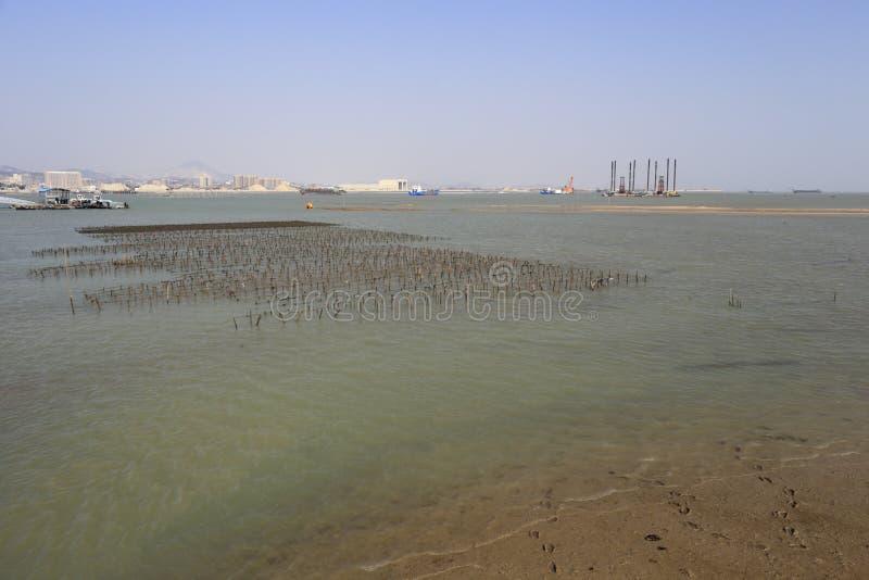 Download Il Porphyra Sistema Alla Spiaggia Dell'isola Del Xiaodeng, Porcellana Fotografia Stock - Immagine di alga, spiaggia: 56891742