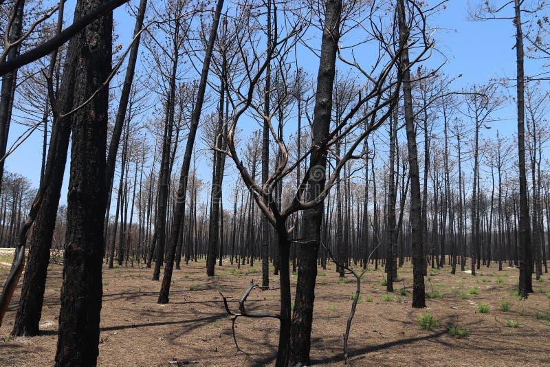 Il Portogallo dopo incendio forestale immagine stock