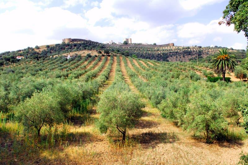 Il Portogallo, regione di Alentejo, paesaggio di Evoramonte fotografia stock libera da diritti