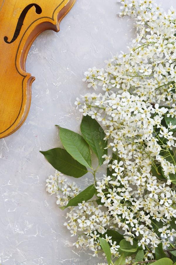 Il primo piano del violino con bello di melo di fioritura si ramifica su un fondo grigio immagine stock libera da diritti