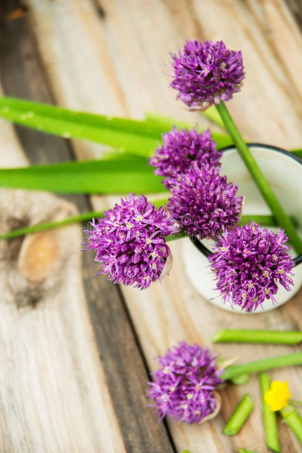 Il primo piano della erba cipollina di fioritura con profondità di campo ed il fuoco bassi si è concentrato sul fiore nella prior fotografia stock libera da diritti