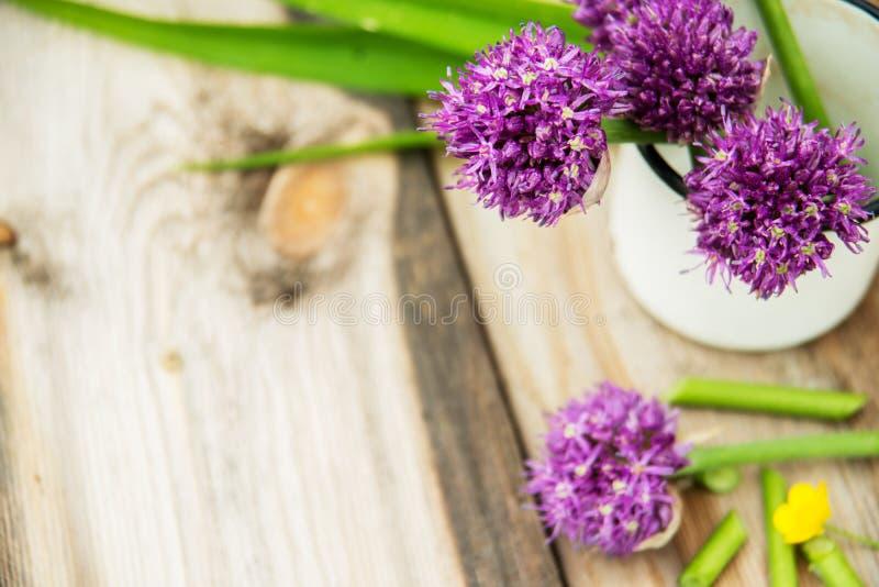 Il primo piano della erba cipollina di fioritura con profondità di campo ed il fuoco bassi si è concentrato sul fiore nella prior fotografie stock libere da diritti