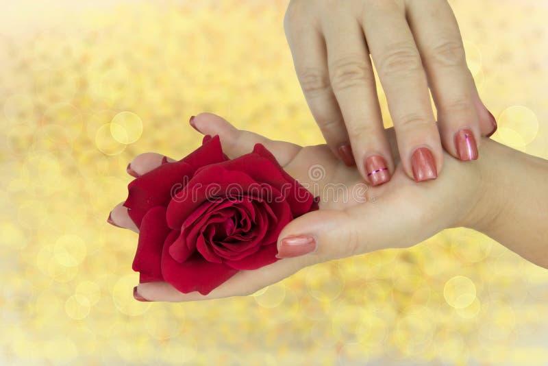 Il primo piano delle mani femminili con i chiodi rosa manicured tiene nella h immagini stock libere da diritti