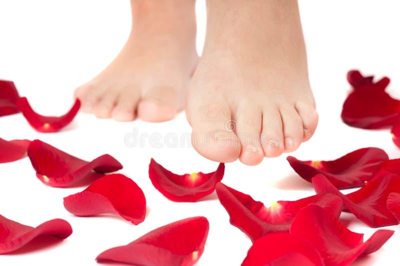 Il primo piano di bei piedini della donna con è aumentato fotografie stock libere da diritti
