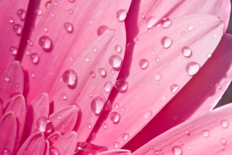 Il primo piano di un fiore con acqua cade #2 fotografia stock