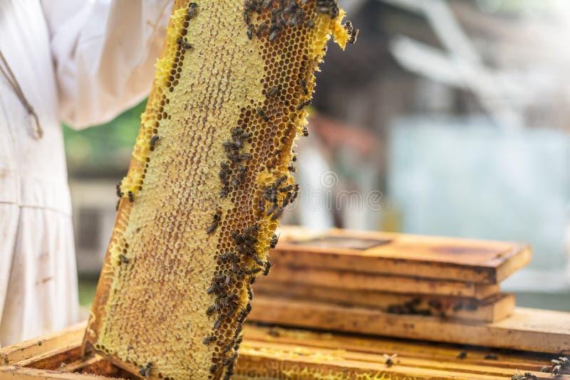 Il processo di ottenere miele, alzante il miele della cera dall'alveare fotografia stock
