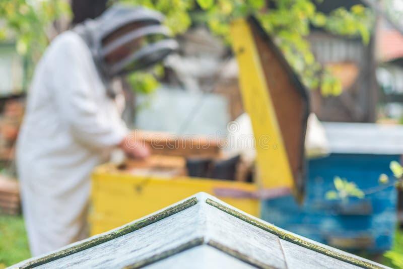 Il processo di ottenere miele, backgroung con il posto per testo immagini stock
