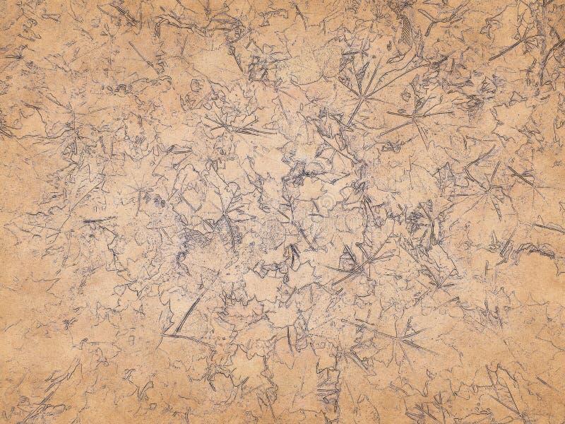 Il profilo delle foglie di acero sui precedenti di pergamena invecchiata fotografia stock libera da diritti