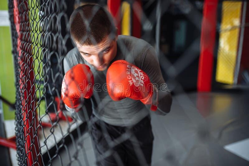 Il pugile maschio si è impegnato nell'addestramento nella palestra, in una gabbia per una lotta senza regole, vettura di pugilato fotografia stock libera da diritti