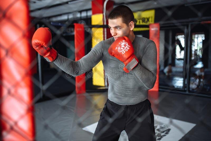 Il pugile maschio si è impegnato nell'addestramento nella palestra, in una gabbia per una lotta senza regole, vettura di pugilato fotografie stock