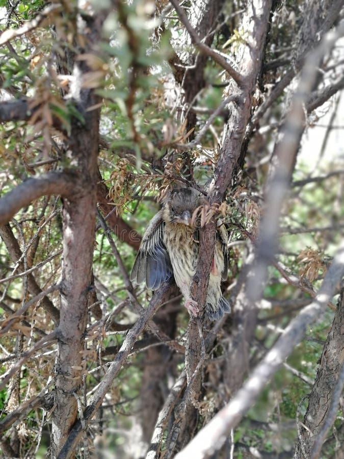 Il pulcino è caduto dal nido fotografia stock libera da diritti