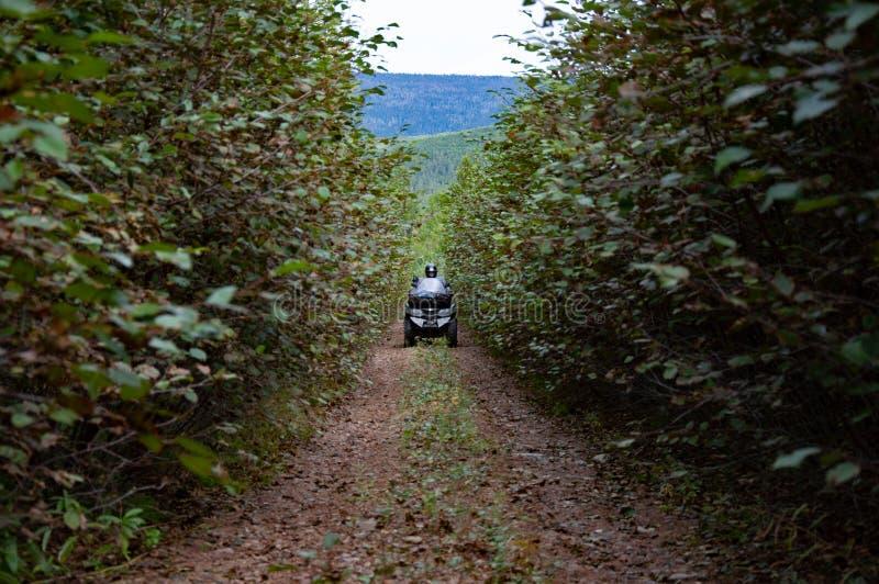 Il quad ATV percorre il sentiero attraverso i cespugli profondi della foresta in estate fotografie stock libere da diritti
