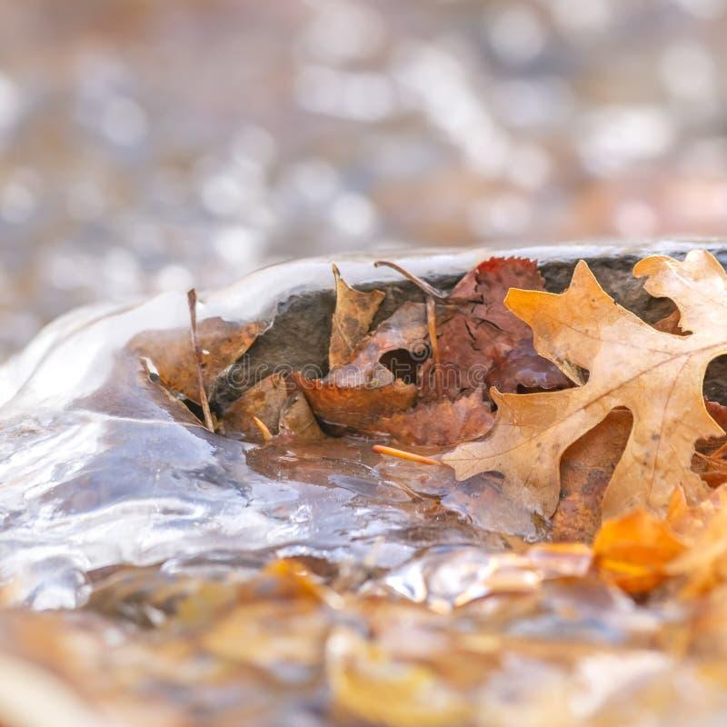 Il quadrato si chiude su delle foglie marroni cadute su un terreno roccioso coperto di acqua congelata fotografia stock libera da diritti