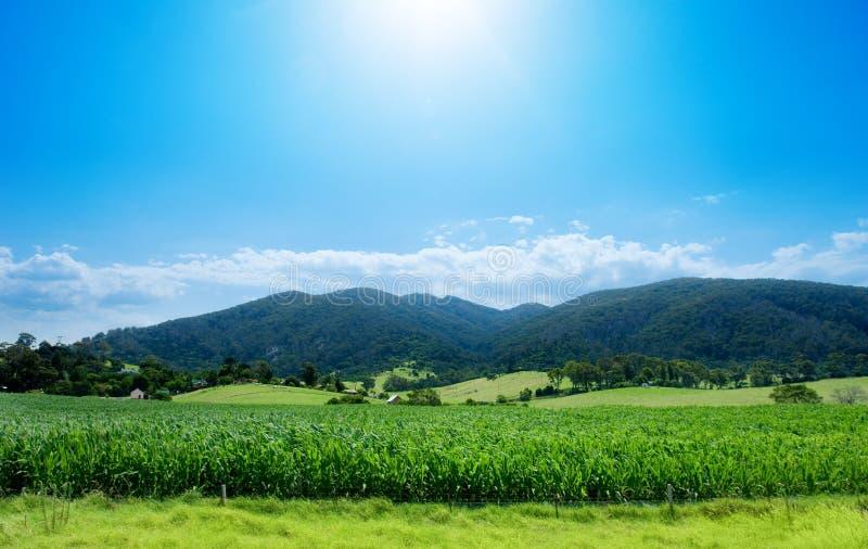 Il raccolto rurale immagini stock