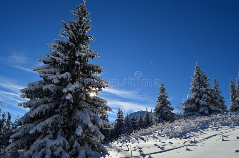 Il racconto di inverni fotografia stock
