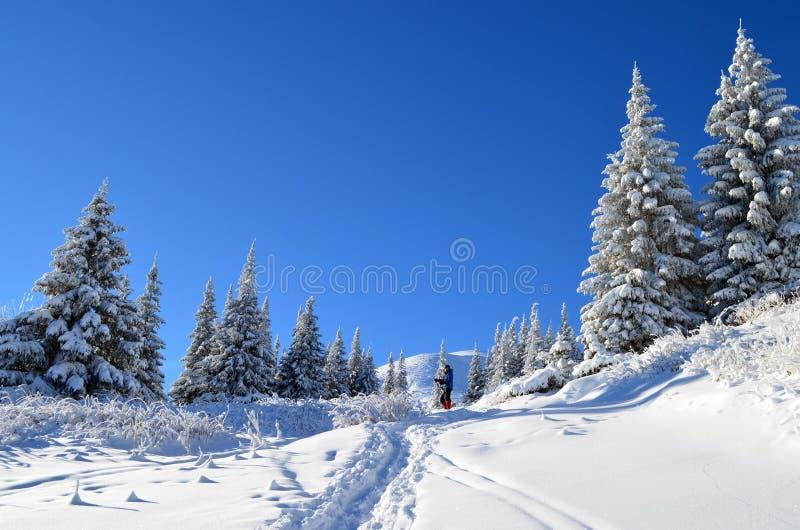 Il racconto di inverni immagine stock libera da diritti