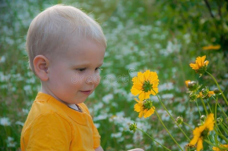 Il ragazzino della bionda costa in un'alta erba densa in cui i camomiles si sviluppano immagini stock