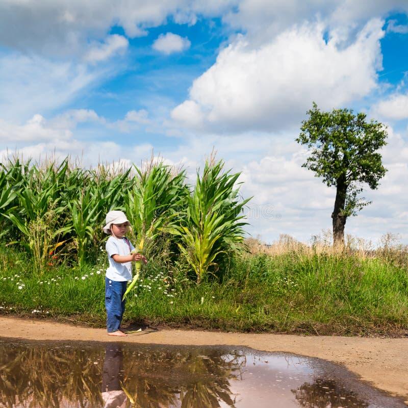 Il ragazzino pela la pannocchia di granturco fotografia stock libera da diritti