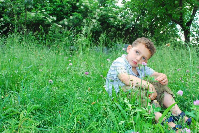 Il ragazzino si siede su un prato inglese del trifoglio. fotografia stock libera da diritti